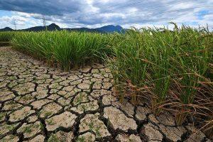 drought-sub-salinity-drought